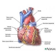 Maladiile cardiovasculare